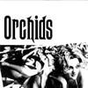 orchids-100